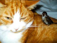 Kater Paulchen und sein Freund Oscar.  #Kater #mycat #sparrow #ivanapaul  #🐈 #vierpfoten  #friendship