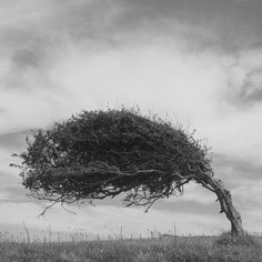 """""""The wind does not break a tree that bends"""" Le vent ne brise pas un arbre qui penche Blowin' In The Wind, Windy Day, Color Of Life, Tree Of Life, Oeuvre D'art, Black And White Photography, Photos, Pictures, Mother Nature"""