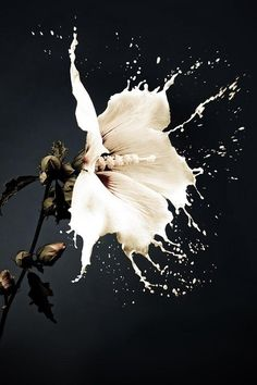 flower splash #amazing #beautiful pictures