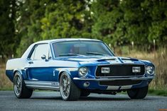 Ford Mustang Shelby Tribute   eBay