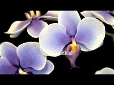 Play - Curso-avanzado-Orquídea-kireies