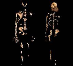 The Malapa skeletons: the nearly two million-year-old Australopithecus sediba