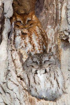 Owl tree camouflage