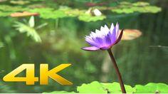 Tokyo The Beautiful - 4K Ultra HD