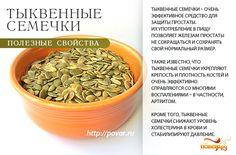 Тыквенные семечки - полезные свойства