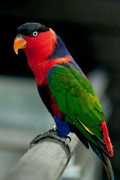 Loro rojo muy hermosa hermosa naturaleza hermosa Lovely Parrot era muy hermoso, increíble pies de Dios en la naturaleza.