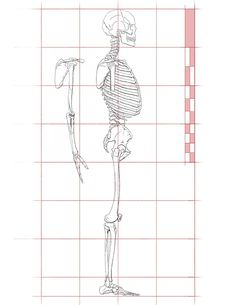 Dr. Paul Richer Revisited (Side View). Simplified Proportions for Figure Drawing by John Hartman.