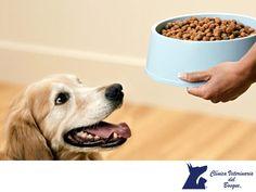 https://flic.kr/p/NL4id9 | Tu mascota y su alimento. CLÍNICA VETERINARIA DEL BOSQUE 3 | Tu mascota y su alimento. CLÍNICA VETERINARIA DEL BOSQUE. Es importante que los perros y gatos ingieran solo los alimentos especialmente concebidos para ellos, pues contienen los nutrientes en cantidad y calidad necesarias para su constitución física, edad y características. Hay que evitar especialmente los alimentos de consumo humano. En Clínica Veterinaria del Bosque te podremos asesorar sobre el…