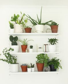 Plant wall shelf interior best plant lover images on house plants indoor pe Indoor Plant Wall, Indoor Garden, Indoor Plants, Home And Garden, Green Plants, Potted Plants, Terracotta Plant Pots, Decoration Plante, Plant Shelves