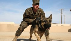Marine Corps Military Police (MOS 5811): 2019 Career Details