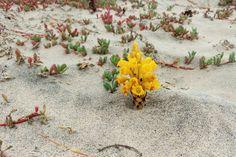 Cabo, Plants, Plant, Planting, Planets