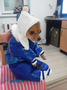 Dog's olimpic wear Sochi 2014.