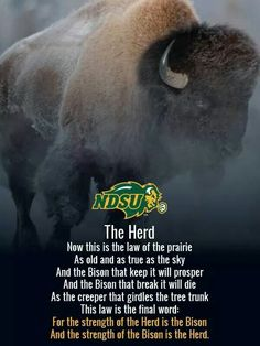 Need fantastic hints concerning working from home? Go to this fantastic website! Ndsu Bison Football, North Dakota State University, Frisco Texas, National Championship, Quotations, Qoutes, Best Quotes, Pride, January 9