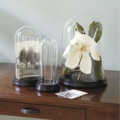 Find home accents to add detail and personality to your home! Shop Ballard Designs to find home accents, home accessories and more! Glass Dome Display, Glass Domes, Sweet Magnolia, Ballard Designs, Home Accents, Decorative Accessories, Accent Decor, Sea Shells, Home Furnishings
