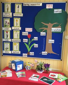 Spring researchers... First grade! English immersion... Flashcards…