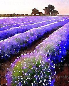 Lavande fleurs aquarelle Art Print Provence France Fine Art #landscapeart