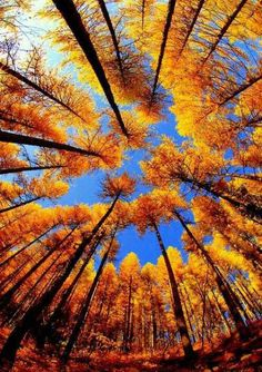 Photo of the day: Autumn Forrest #fall