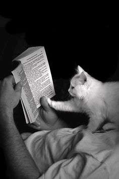 Adorable cat and book!