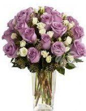 fialové růže