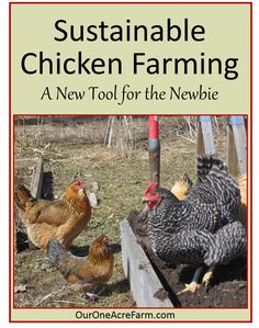 There is a new tool in progress, to teach people how to raise chickens sustainably and humanely. It's a film that the folks at Abundant Permaculture are creating, featuring leaders such as Joel Salatin. Here is an introduction to the project.