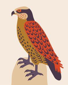 Faucon crécerelle Lausanne, Lisa, Exhibition, Expo, Illustration, Rooster, Artwork, Rue, Animals
