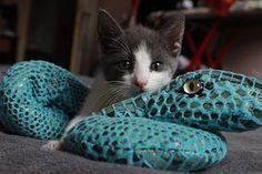 Kitten, Cat, Playing, Feline, Kitty