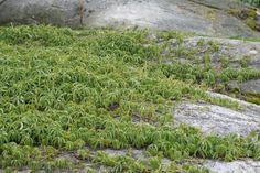 Seks kule klatreplanter du vil lykkes med - Tusenfryden Stepping Stones, Planter, Outdoor Decor