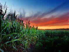 Cornfield sunset by James Jordan, via Flickr