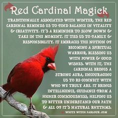red cardinal, symbolism, bird, animal, totem, spirit, nature, medicine, sychronicities, spiritual, meaning, witch, witchcraft, shaman, magick . www.whitewitchparlour.com