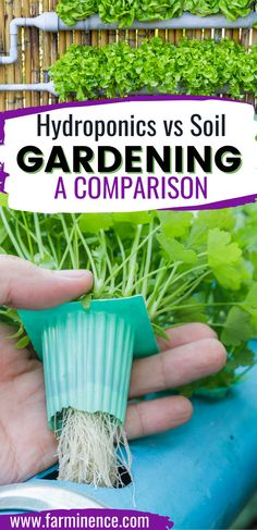 Is hydroponics gardening right for you? Compare hydroponic gardening against soil gardening.