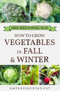 A sowing plan for growing veggies and herbs in the fall garden. Be sure to start your seeds in mid to late summer. Garden Whimsy, Veg Garden, Edible Garden, Vegetable Gardening, Garden Plants, House Plants, Growing Herbs, Growing Vegetables, Fruits And Veggies