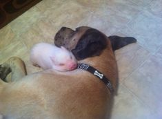 He wasn't sleeping, but stayed like that for half an hour so he wouldn't wake her up, best friends forever.