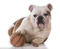 Dogs go through a 'stroppy teenage phase' as they grow up http://clclp.me/4Qs9#utm_sguid=182606,2cc0edb3-55b1-3882-55bd-0419f5fa23cd