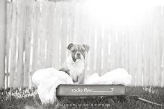 Etta the Bulldog Puppy » Missy Moo Studio