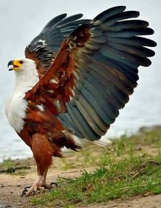 Wonderful Eagle.