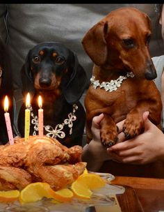 Is that chicken?  Now THAT's a good doxie birthday cake!❤