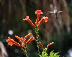 Audubon Swamp at Magnolia Plantation & Gardens - Ross Almers Magnolia Plantation, Magnolia Gardens, Historical Sites, Professional Photographer, Wildlife, Hummingbirds, Nature, Flowers, Naturaleza
