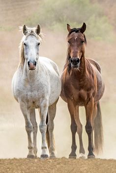 best friends!  print available.  portion of proceeds to www.returntofreedom.org