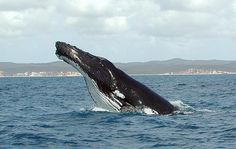 How to Plan a Whale Watching Trip in Monterey California