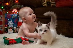 cute baby and gorgeous cat