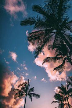 Tropical Evening - @BadBixchDecor