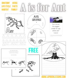 A-Z insect Learning  EACH LETTER INCLUDES:  Coloring Page with Handwriting  Life Cycle Wheel  Photo Bible Verse Card  Large Anatomy Page  Diet, Habitat, Social Facts  Notebooking Page  +Extras
