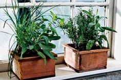 Essential Perennial Herbs Culinary herbs and saladings