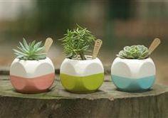 Ceramic Colors - Succulents https://www.facebook.com/vivariumnaturaleza