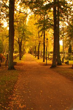 Even a cemetery can be a happy place. That's where I go when I want some piece and quiet. Cemetery, Country Roads, Places, Happy, Photographs, Sunglasses, Photos, Ser Feliz, Sunnies