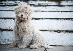 Possibly The Cutest Dog | Flickr - Photo Sharing!