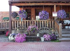 Beautiful Hanging baskets..picture I took in Prairie Du Chien, WI