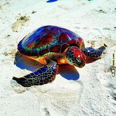 Colorful rainbow turtle