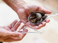 Filler: Bark - 7 All-Natural Fillings for Clear Glass Ornaments on HGTV