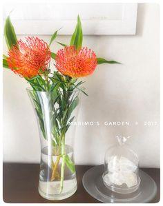 ピンクッション 赤い花